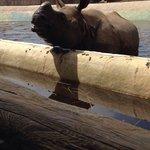 Feeding the rhino