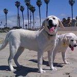Huntington Beach Dog Beach with Sadie and Cindy