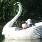 swan peddle boat