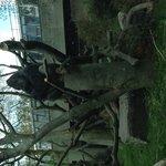 The Silverback Gorilla