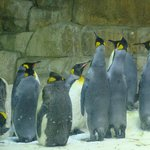 Penquins are some of our favorites