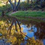 San Pedro River by Bruce Wertz