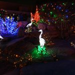 Christmas Lights at Ethel M