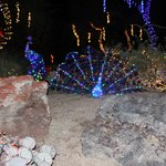 Christmas Lights at Ethel M