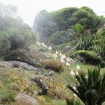 Sheep always ran away from us