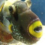 Peixe visto de pertinho