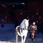 Andulusian Horses