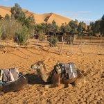 hotel-organized trip into desert