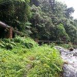 lush greenery environment