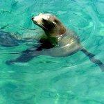 Cheeky Sea Lion