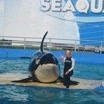 La despedida de la orca