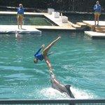 Función de delfines