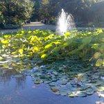 Fontaine aux nénuphars (proche de la serre)