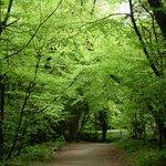 Belleek Park