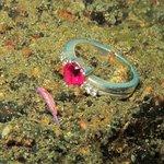 tiny nudibranch