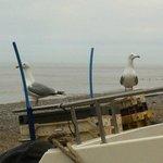 Seagulls at Cromer