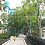 swimming pool & park area