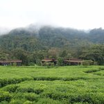 Nested in the tea plantation at the edge of the rain forest
