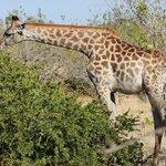 Unbelievable wildlife in the mighty Delta