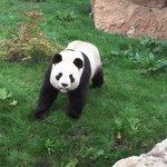 Le Zoo des Pandas