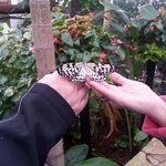 Memorable afternoon at the butterfly exhibit