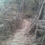The Living Root Bridge