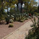 Всевозможные кактусы и агава
