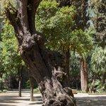 Разнообразные деревья