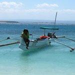 engage local shark fishermen through ecotourism and sustainable livelihood