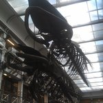 The building can still support 2 whale skeleton.