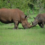 Savannah Southern Safaris - Private Tours