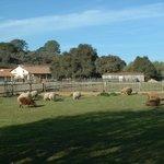 Animals at La Purisima