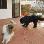 Gioco di Fata con il cane del proprietario