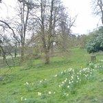 Darley Park