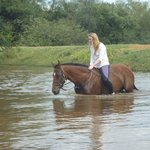 Swimming with the horses was wonderful!