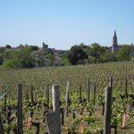 Vineyards near Saint Emilion