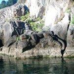 Lizard in the rocks