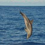 Dolphin seen from Fancy II