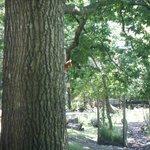 red squirrel feeding station.