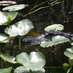 Gator Park