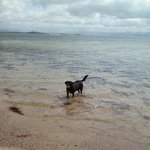 Our dog paddling in the sea