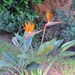 Flowers in Luisas garden