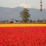 La Conner - Skagit Valley Tulip Festival 4-13-2014