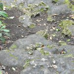 rotting enzyes from foliage makes the coral rock porous - relief rocks?
