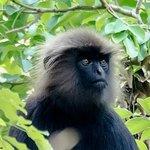Black Monkey. Taken at the Resort