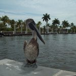 Pelican landed on the boat.