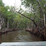 Mangroves were beautiful.