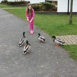 Ducks come to the doorstep for their dinner sometimes :)