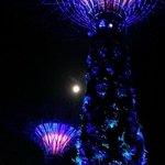 Super Tree show at night