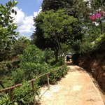 Pathway from room to reception at 98 acres